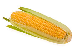 Free Corn Stock Images - 5647014
