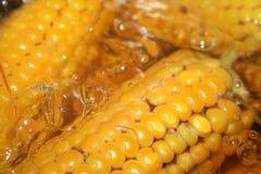 The Corn Royalty Free Stock Photo