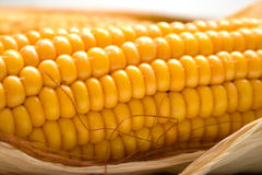Corn. Freshly harvested corn, close up. Shallow DOF, macro, background Stock Photo