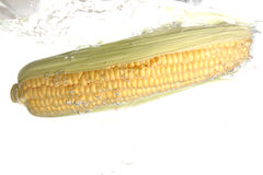 Corn. Small display of fresh vegetable Royalty Free Stock Photography