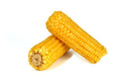 Corn. The particles full of fresh corn Stock Images