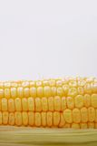 Corn. Golden Corn isolated on white Royalty Free Stock Images