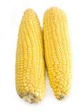 Corn Royalty Free Stock Photos