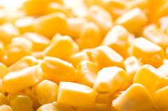 Corn. Fresh and very healthy corn Stock Photos