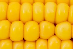 Corn abstract Stock Photo