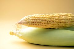 Ear of corn, closeup with space for copy. Corn is an agricultural product, can used for various eatables. like popcorn and many more testy food items stock images