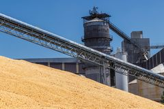 Free Corn And Grain Handling Or Harvesting Terminal. Corn Can Be Used For Food, Feed Or Ethanol V Royalty Free Stock Photography - 117533707