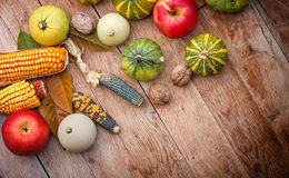 Corn, apple and pumpkin - gourd family Royalty Free Stock Photo