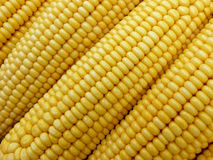 Corn bacground Royalty Free Stock Photos