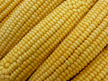 Corn bacground Royalty Free Stock Images