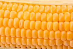 Corn background Stock Photo