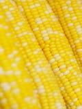 Corn background Royalty Free Stock Photos