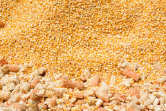 Corn background. The yellow background of fresh maize corn Stock Images