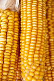 Corn background Stock Photos