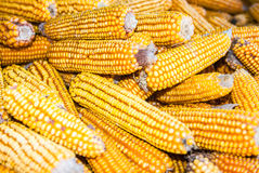 Corn background Royalty Free Stock Photos