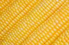 Corn background. Yellow fresh sweet corn background Stock Photography