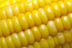 Corn Background Stock Images