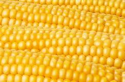 Corn - background Stock Photos