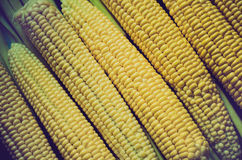Corn background. A lot of yellow corns as a background Stock Photography