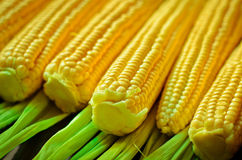 Corn background. A lot of yellow corns as a background Stock Photos