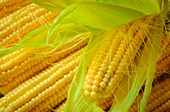 Corn background. A lot of yellow corns as a background Royalty Free Stock Image