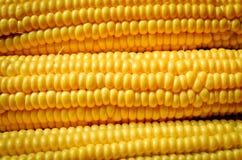 Corn background Stock Image