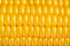Corn background, macro closeup. Ripe corn background, macro closeup stock photo