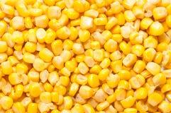 Corn background pattern Stock Photos