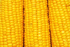 Corn background pattern Royalty Free Stock Photos
