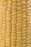 Corn. Background Texture Vegetable grain Royalty Free Stock Photos