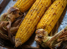 Corn baked with herbs and spices on a baking sheet Royalty Free Stock Images