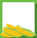 Corn banner Royalty Free Stock Image