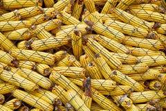 Corn barn Stock Images