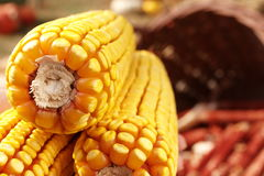 Corn in the basket. In close-ups Stock Photography