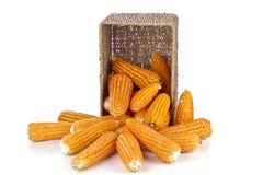 Corn in a basket Stock Photos