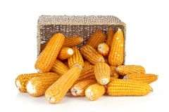 Corn in a basket Royalty Free Stock Photo