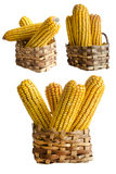 Corn basket Royalty Free Stock Images
