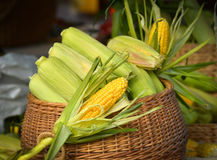 Corn in basket Stock Photos