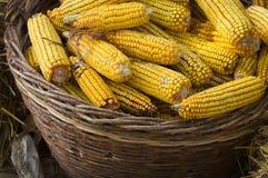 Corn basket Royalty Free Stock Photos