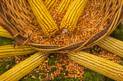 Corn basket Stock Image
