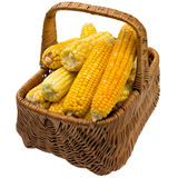 Corn basket. Stock Image