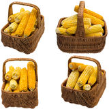 Corn basket. Stock Images