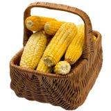 Corn basket. Stock Photos