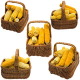 Corn basket. Royalty Free Stock Images