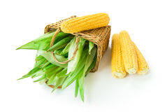 Corn and basket with leaves. On white background Stock Photos
