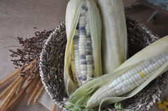 Corn in Basket Royalty Free Stock Image