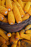 Corn in the basket royalty free stock photo