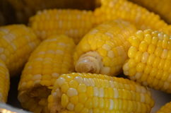 Corn. BBQ Corn Thanksgiving, july 4th, america, monsanto, ethanol, corn syrup stock photos
