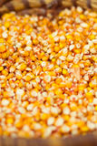 Corn beans Royalty Free Stock Photography