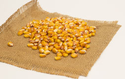 Corn beans Stock Image